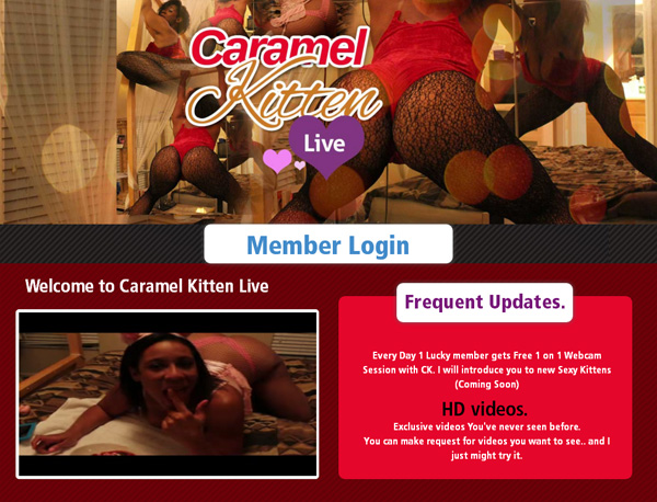 Live Kitten Caramel Premium Password